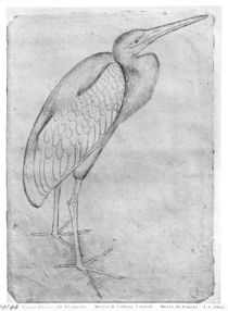 Pelican, from the The Vallardi Album by Antonio Pisanello