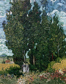 The cypresses, c.1889-90 von Vincent Van Gogh