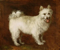 Spitz Dog, c.1760-70 von Thomas Gainsborough