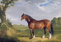 A Clydesdale Stallion, 1820 by John Frederick Herring Snr