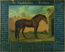 The Godolphin Arabian by D. Quigley