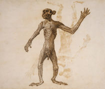 Monkey Standing, Anterior View by George Stubbs