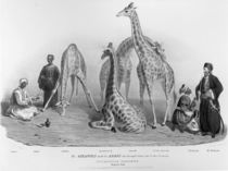 The Giraffes with the Arabs who brought them over to this country von George the Elder Scharf
