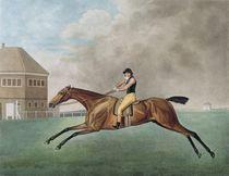 Baronet, 1794 von George Stubbs