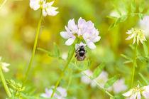 Bee and Clover von maxal-tamor
