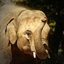 Elefant beim Sandbad 1 von kattobello