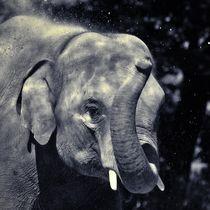 Elefant in schwarz und weiß 2 von kattobello