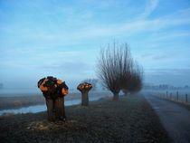 Kopfweiden am Niederrhein von Frank  Kimpfel