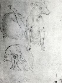 Study of a dog and a cat, c.1480 von Leonardo Da Vinci
