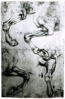 Studies of Horses legs von Leonardo Da Vinci