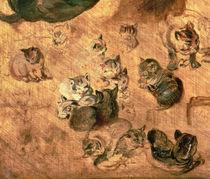 Study of cats, 1616 by Jan Brueghel the Elder