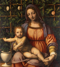 Virgin of the Rose Bush by Bernardino Luini