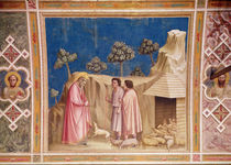 Joachim among the Shepherds von Giotto di Bondone