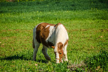 Pony and a grass field by vasa-photography