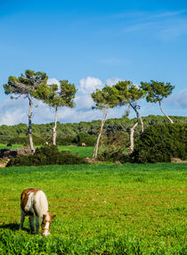 Pony in the green by vasa-photography