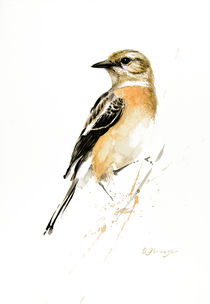 African Stonechat female von Andre Olwage