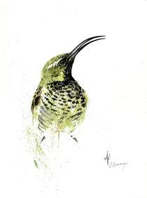 Amethyst Sunbird female von Andre Olwage