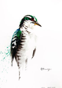 Diderick Cuckoo by Andre Olwage
