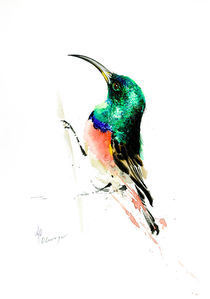Greater Double Collared Sunbird von Andre Olwage