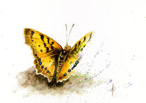 Orange Butterfly by Andre Olwage
