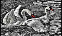 Digital Art Schwanenliebe 3 von kattobello