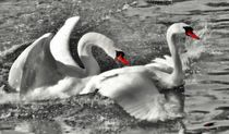 Swan Love by kattobello