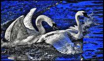 Digital Art Schwanenliebe 2 von kattobello