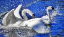 Swan Love in the blue Water by kattobello