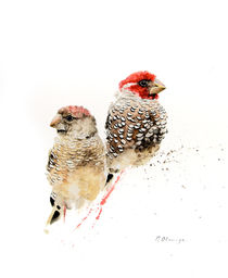 Red Headed Finches by Andre Olwage