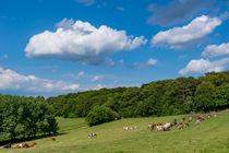 Glückliche Kühe auf der Weide von Ronald Nickel