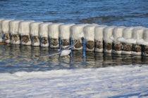 Buhnen im Winter an der Ostsee by frakn