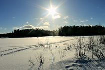 Winterlight by Heidi Piirto
