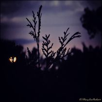 Twilight  (c) copyright By  Mary Lee Parker 17, von Mary Lee Parker