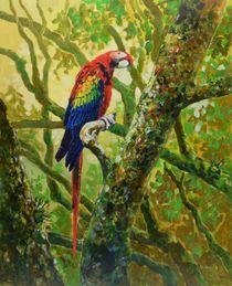 Scarlet Macaw by Geoff Amos