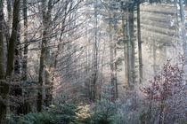 Lichtstrahlen im vereisten Wald von Manfred Herrmann