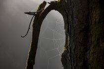 Nebel und Spinnweben im Wald by Ronald Nickel