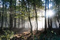 Morgennebel im herbstlichen Wald by Ronald Nickel