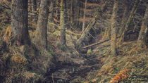 In the Woods by Matthias Haker