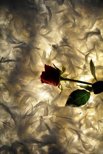 Das Rosenbett von Claudia Evans