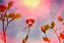 Magnolien by Claudia Evans