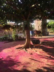 Pink Farm by Raphaela Cantarelli