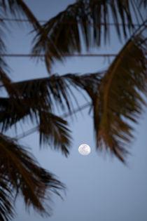 Ein weißer Vollmond leuchtet zwischen Palmblättern am blauen Abendhimmel auf der tropischen Insel Sri Lanka von Gina Koch