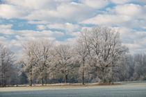 Wintermorgen von Karin Stein