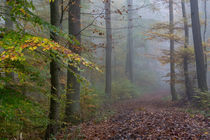 Durch den Nebel im Herbstwald by Ronald Nickel