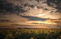 Wolken und Abendrot überm Rapsfeld von micha-trillhaase-fotografie