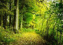 Miracle Wood by Photo-Art Gabi Lahl