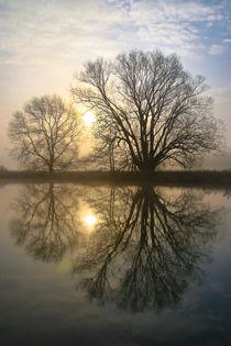 Bäume am Wasser by Bernhard Kaiser