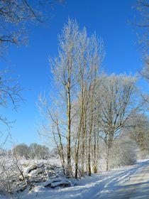 Schöner Winter von gscheffbuch