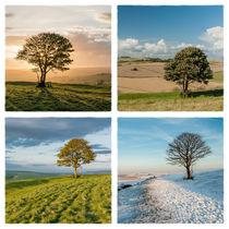 The Nowhere Tree - Four Seasons von Malc McHugh