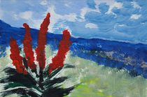 Madeira | Impression mit Aloe Ferox